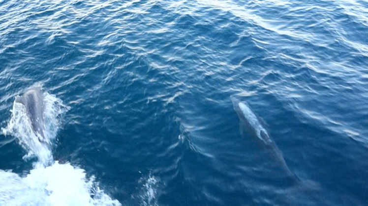 delfin_2_b