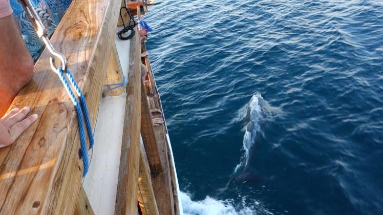 delfin_b
